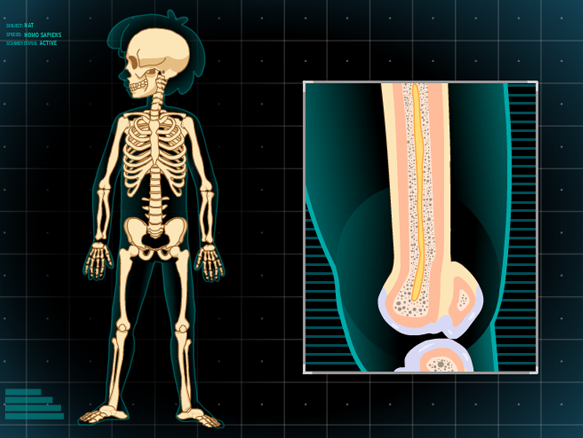 build-a-body: skeletal system - gameup - brainpop., Skeleton